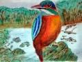 Kingfisher Habitat:  Europe