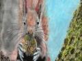 Red Squirrel enjoying a juicy melon