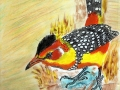 Red and Yellow Barbet         Habitat:  East Africa