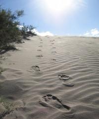 Foot-Steps-200x242