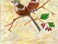 Australian Wrens Habitat: Australia